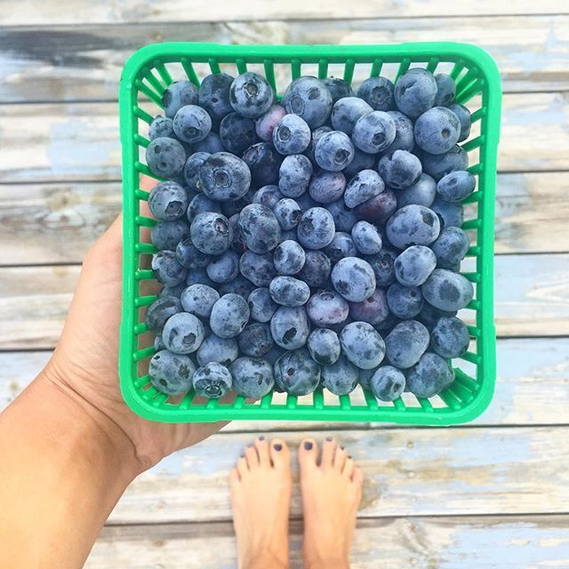 Freshly picked. #localfarms #blueberries #collingwood #discoveron