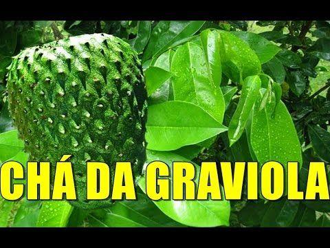 CHÁ DA FOLHA DA GRAVIOLA ADEUS DIABETES,HIPERTENÇÃO COLESTEROL POR MARA CAPRIO - YouTube