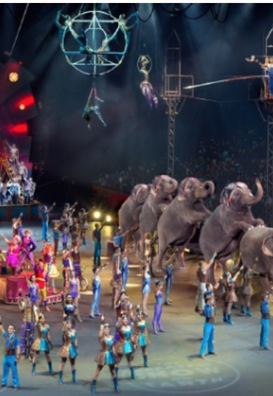 Discount coupons for ringling bros circus