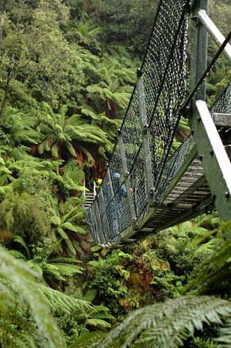 Suspension Bridge by Montezuma Falls - Tasmania, Australia                                                                                                                                                                                 More