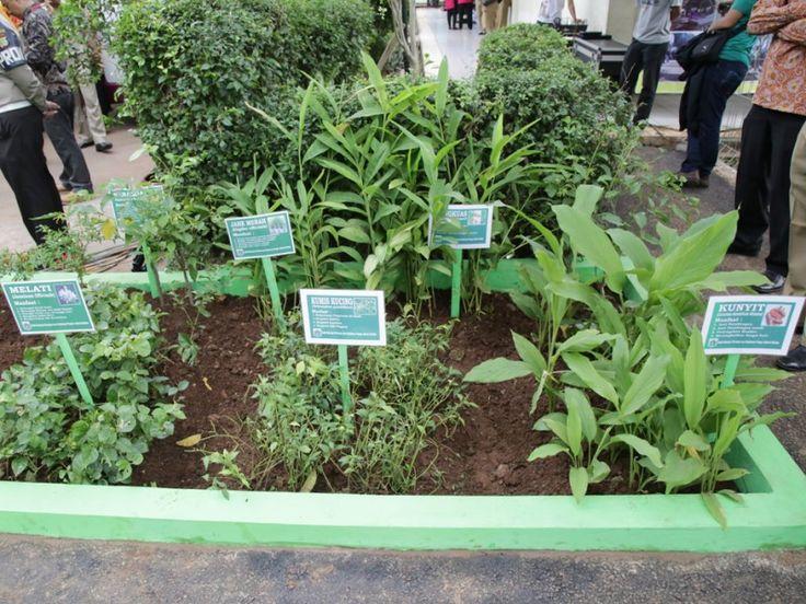 taman tanaman obat keluarga  toga