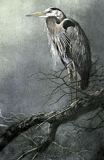 Great Blue Heron 1978 - Robert Bateman