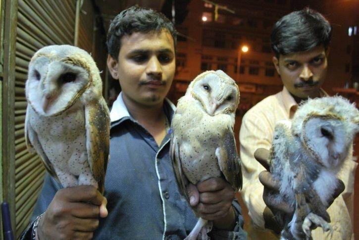 طائر البومة والسحر الطير الأبابيل Owl Animals Bird