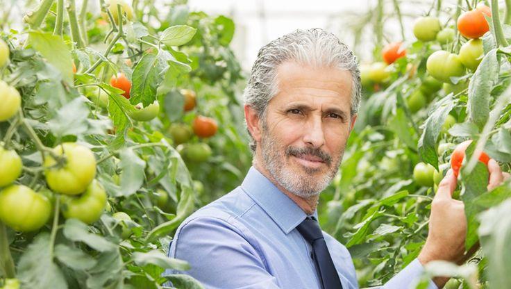 Zdravé rajčiaky a bohatá úroda... O to sa podľa výskumníkov postará aspirín. Vyskúšate?