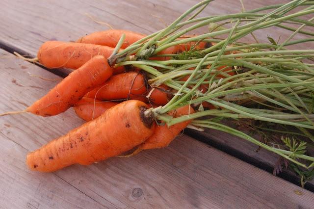 Freezing Carrots.
