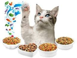 We provide the best wet cat foods online to make your life easier.  Our all products are prepared with the help of high-quality ingredients to support balanced nutrition.  Besides cat foods, we also offer the food products for the dogs. So for getting any natural pet food online you can order from home and save your precious time and money.