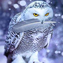 """Volledige Vierkante/Ronde Boor 5D DIY Diamant Schilderen """"Sneeuw eagle veren"""" 3D Borduren Kruissteek Mozaïek Strass Decor Gift(China)"""