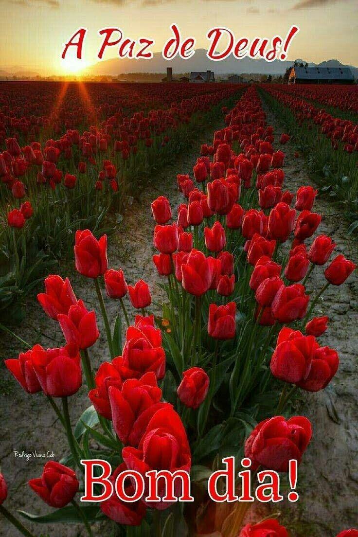 Pin De Karinacardoso Em A Paz De Deus Bom Dia Com Flores Lindas