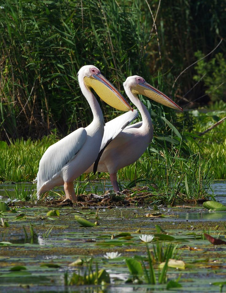 Danube Delta More