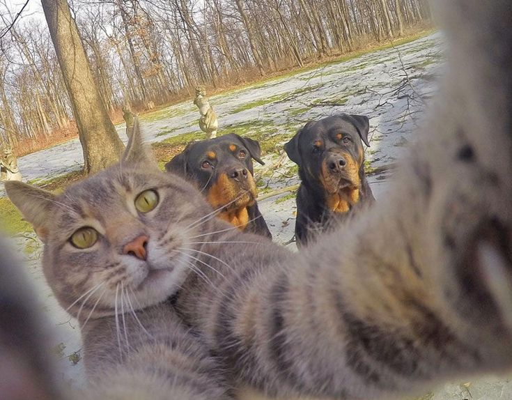 Best Cat Selfies Images On Pinterest Beautiful Cats And Friends - The 21 best animal selfies of all time
