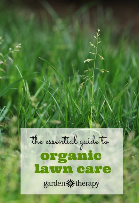 The Essential Guide to Organic Lawn Care
