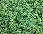 #2: Alfalfa Seed 1lb Bag (COATED)