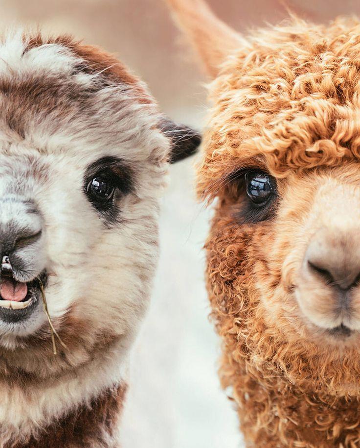 фото милых животных спасут ваш брак был новаторским