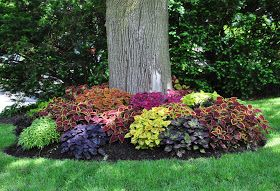 Three Dogs in a Garden: One Simple Change Love the idea of using coleus instead of annual flowers in places