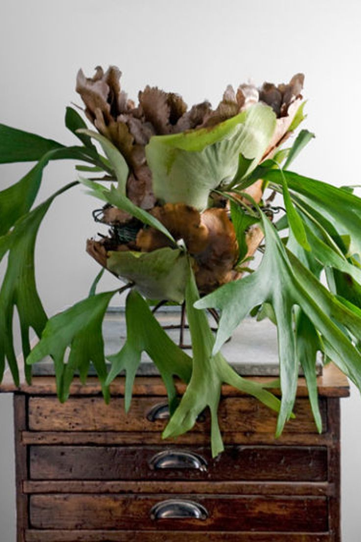 17 Of The Best Indoor Plants To Make Your Home Feel Unique