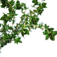 Cómo cultivar orégano - 9 pasos - unComo