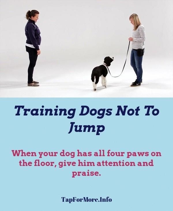 Stop Dog Jumping And Dog Leash Training Check Pin For Many Dog