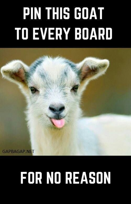Funny Meme About Goat vs. Board #funnyanimalspictures