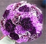 Dill's Passionately Purple Carnation Cluster Bridal Bouquet --- gorgeous purple carnation bouquet - deep purple, plum, light purple, etc.