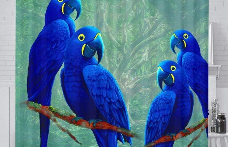 Hyacinth Macaw Parrots for sale in 2020 | Macaw parrot for sale, Macaw  parrot, Macaw