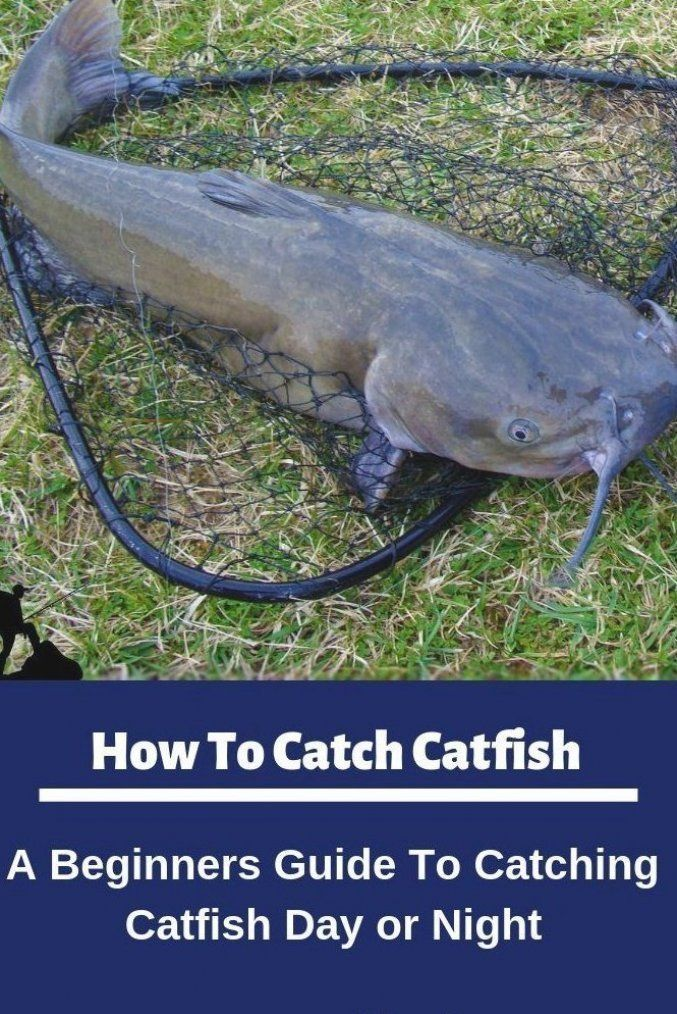 Pin By Tula Irategui On Fishing In Iceland In 2020 How To Catch Catfish Catfish Fishing Fishing Adventure