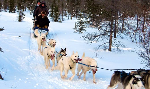 Happy mushers and sled dogs in Churchill, Manitoba, Canada.
