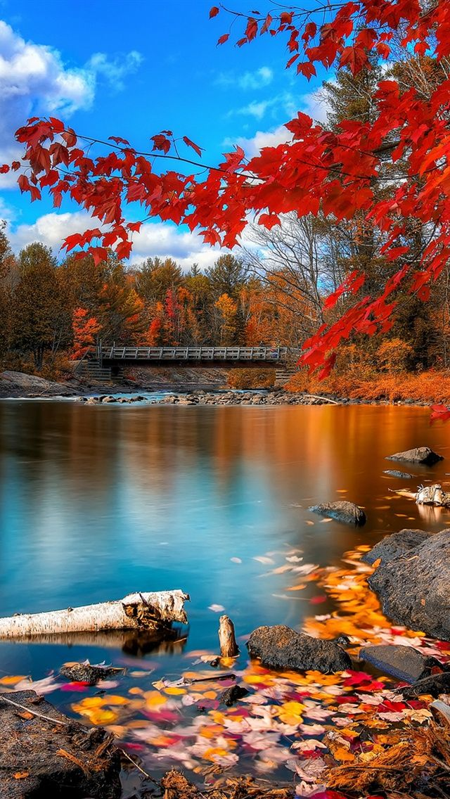 Fall Leaves Background Wallpapers | WIN10 THEMES
