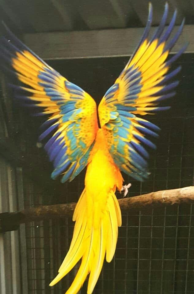 Perroquets Oiseaux Exotiques Oiseaux De Compagnie Perroquet Ara