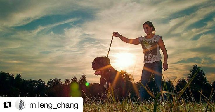 Una passeggiata al tramonto  . . #Repost @mileng_chang with @repostapp  I love iT  #instagallery #instacollage #insta #party #pups #penoza #cane #canecorso #cc #dog #doggen #hond #hund #hound #italy #italiandog #dogsitter #italianmastiff #pica #picture #photo #doglovers #dogs #hondenliefde #dog #milano #hondenliefhebbers @johnponsteen