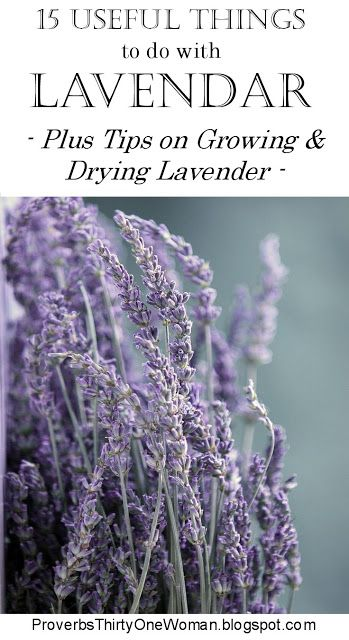 15 Useful Things to Do With Lavendar (Plus Growing and Drying Tips) | Proverbs 31 Woman