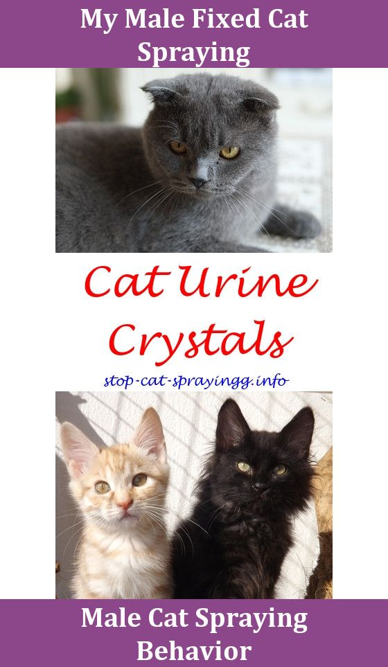 cat spraying cleanses can cats spray spray to put on christmas tree to keep cats away only male cats spray how to apply frontline spray for catsca - How To Keep Cat Away From Christmas Tree