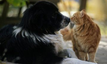 It's Officially 'Love Your Pet Day', As If You Needed A Reminder