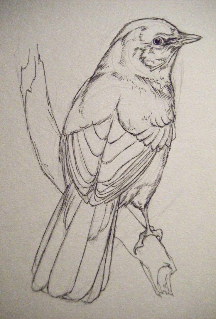 Рисунки птиц карандашом картинки