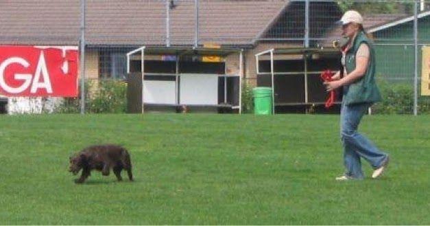 www.koiraharrastaja.fi: Anna anteeksi itsellesi ja koirallesi