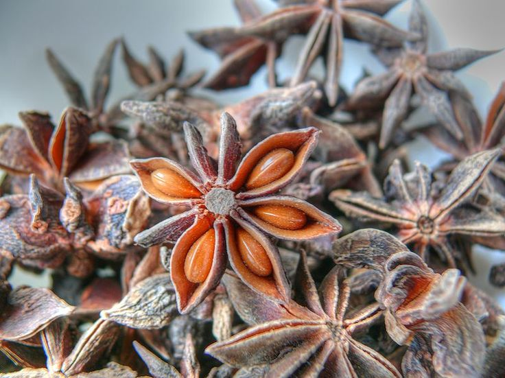 cocoroachchanel:    Illicium verum  i think star anise is one of the most beautiful and perfect things. seed pods are amazing.