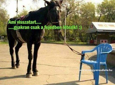 http://magyarosdieta.hu/biocom/uzleti-lehetoseg/