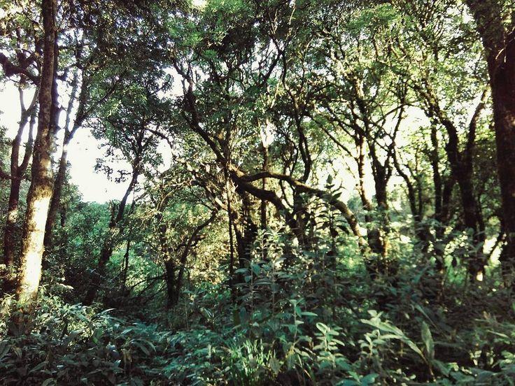 """#hiking #hikingjabar #puncakmanglayang"""