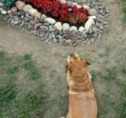 """El amor eterno existe, al menos para """"Capitán"""", un perro fiel que duerme desde hace seis años sobre la tumba de su amo en un cementerio de Argentina, según informó el portal Yahoo.  """"El perro apareció un día en el cementerio, sin que nadie lo trajera, y empezó a dar vueltas por todos lados hasta que encontró solo la tumba de su amo"""" , explicó el director del cementerio, Héctor Baccega.  """"Capitán"""", un perro mestizo con algo de ovejero alemán, fue el regalo sorpresa que Miguel Guzmán le hizo a…"""