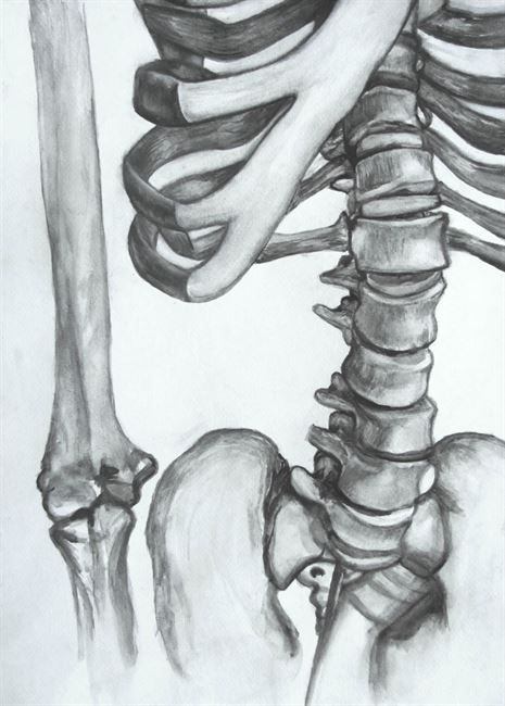 Skeletal Study in Water Soluble Graphite - Conway High School Art Project