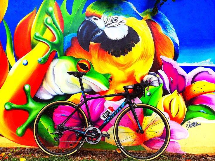 New steed! Pretty happy with it #giant #tcr #sramred #gumwalls #pretty #colours