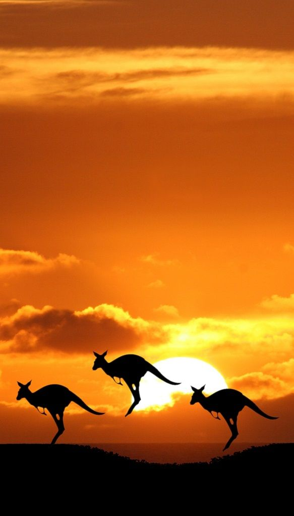 Kangaroos bouncing off into the sunset, Australia