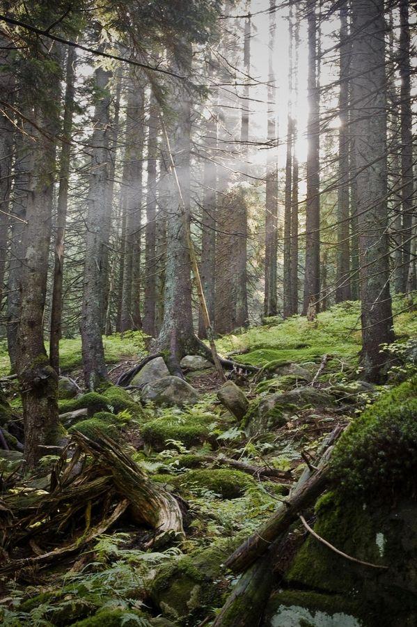 Carpathians by Oleg Gordienko