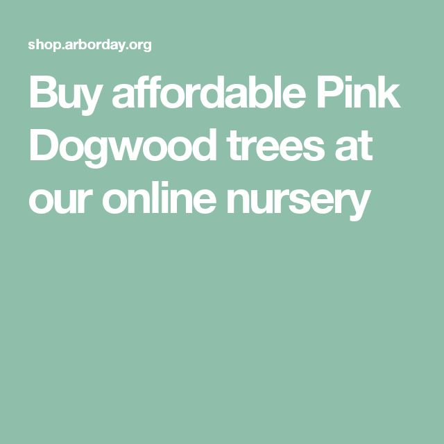 Buy affordable Pink Dogwood trees at our online nursery