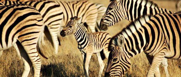 All for Nature - De mooiste wildlife reizen - Travel & Consultancy Walvis kijken in Portugal