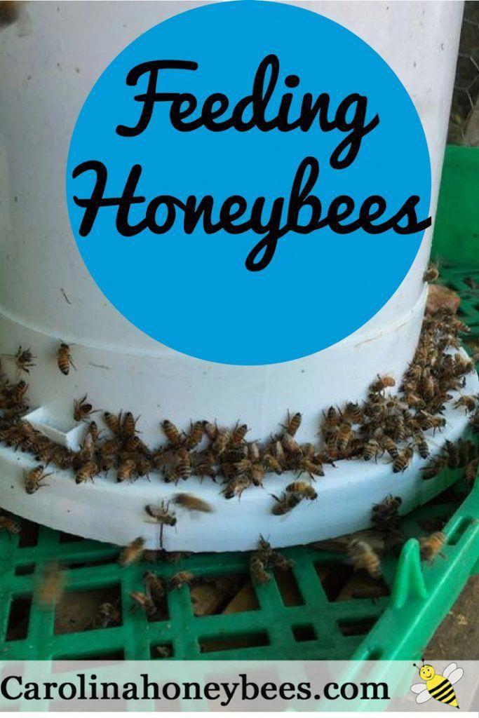 Feeding Bees Sugar Water How Why Feeding Bees Bee Keeping Sugar Water For Bees