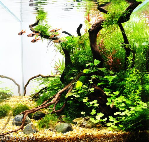 2013 AGA Aquascaping Contest - Entry #247