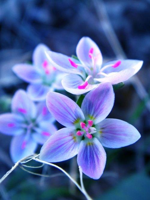 .: Nature, Purple, Color, Blue, Beautiful Flowers, Pretty Flowers, Flowers Plants Gardening, Photography, Flower