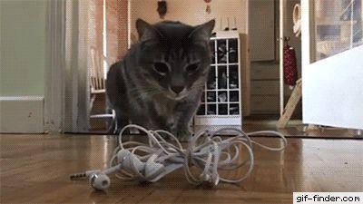 Cat Gets Scared of Headphones