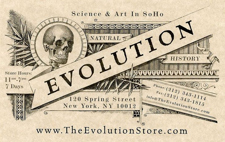 40 best the evolution store images on pinterest evolution the our business card reheart Choice Image
