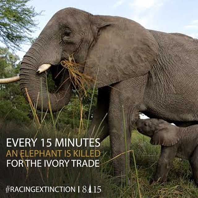 Racing extinction campaign for elephants